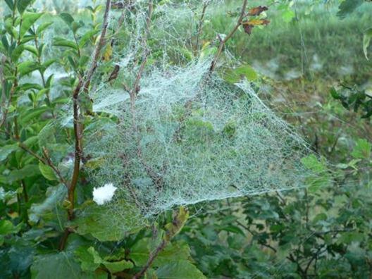 spinnenwebben6_538x403