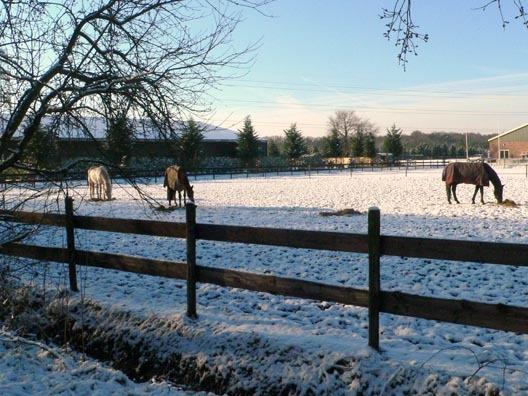 paarden_in_de_sneeuw