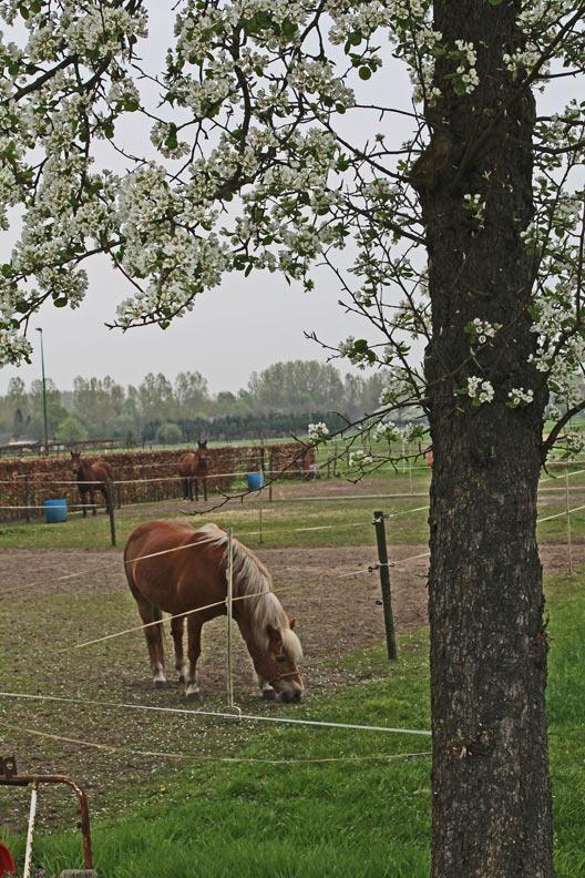 aarle_voorjaar