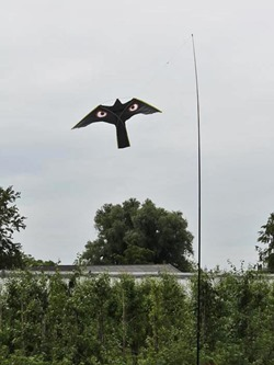vogelschrik